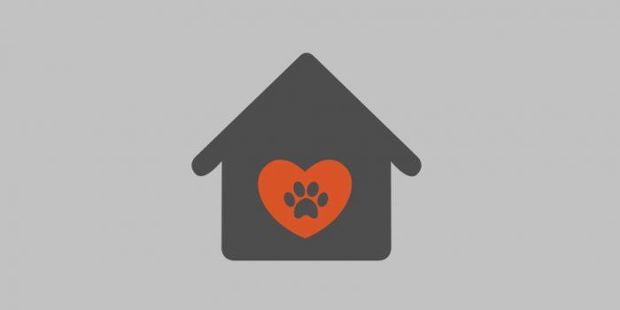 Bokserka Tajra szuka ciepłego domu